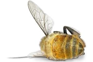 dead_bee2