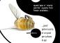 salviamo chi vuole salvare le api