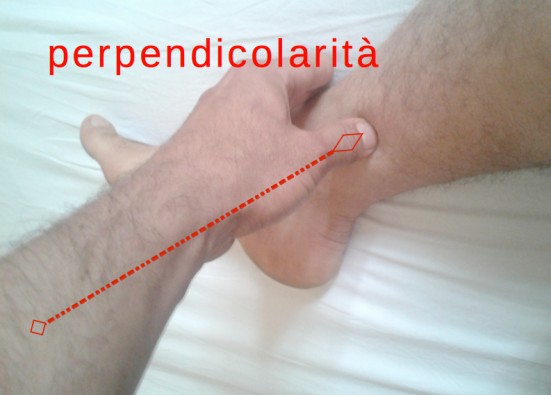 Perpendicolarita