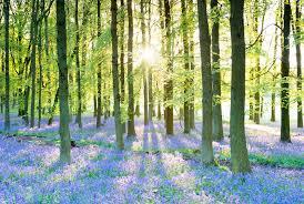 ecological mindfulness.jpg